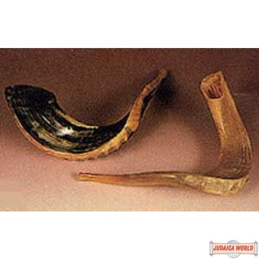 Shofar - Medium